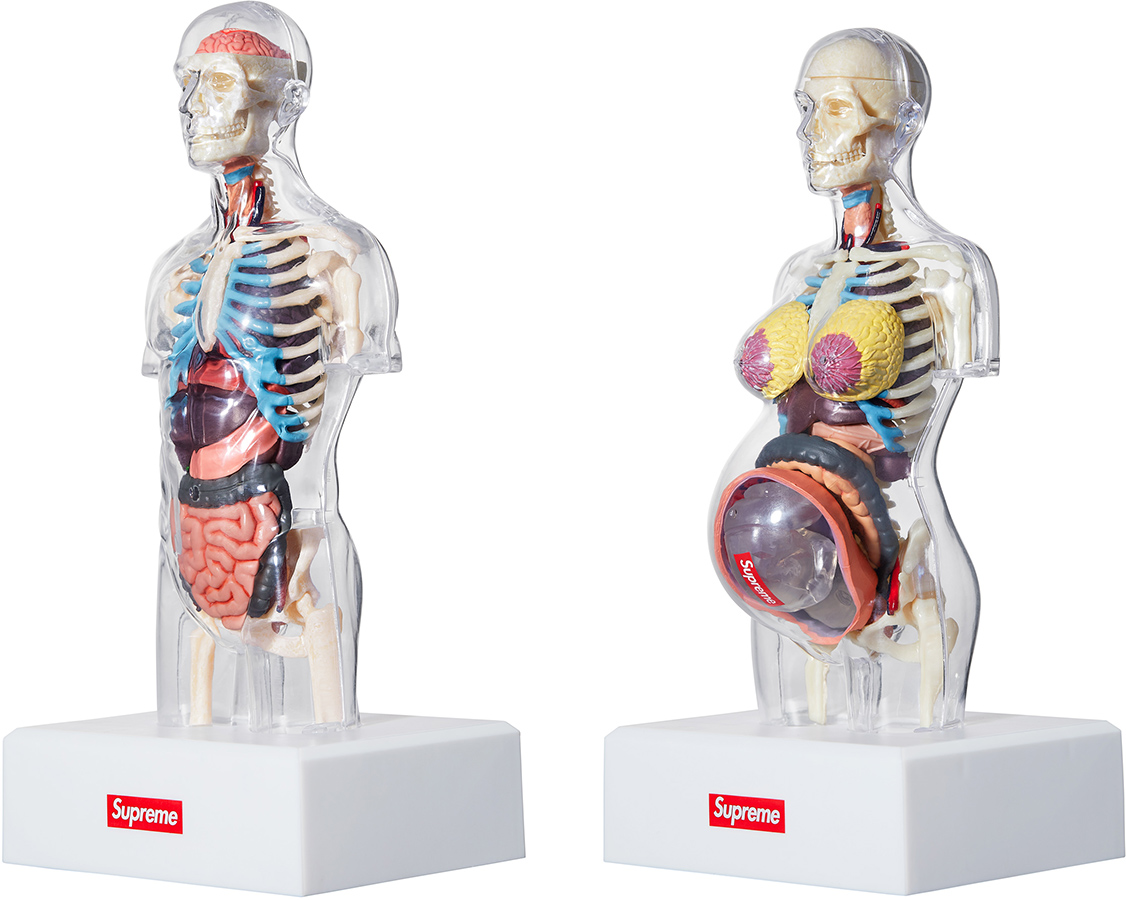 Supreme Male and Female Anatomy Model